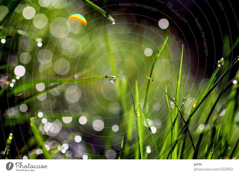 ökosystem Umwelt Natur Pflanze Wassertropfen Sonnenlicht Frühling Sommer Gras frisch natürlich grün ruhig Halm nass Tropfen Tau Grünpflanze Farbfoto