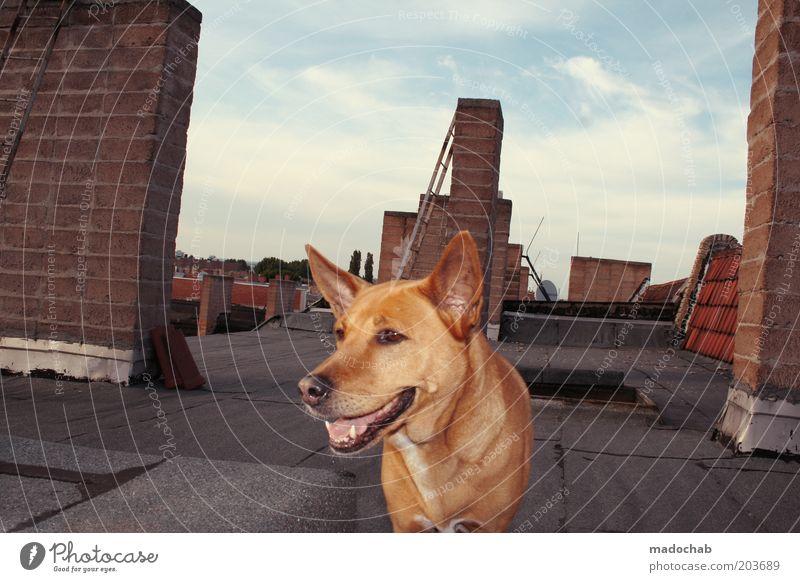 HEINZ Dach Schornstein Tier Haustier Hund Vertrauen Sicherheit Schutz Sympathie Treue schön elegant Freiheit Gelassenheit Leben Lebensfreude Farbfoto