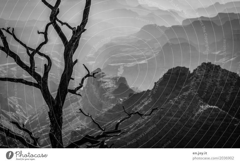 urgewaltig Ferien & Urlaub & Reisen Abenteuer Ferne Umwelt Natur Landschaft Baum Ast Felsen Schlucht Grand Canyon außergewöhnlich Bekanntheit dunkel gigantisch