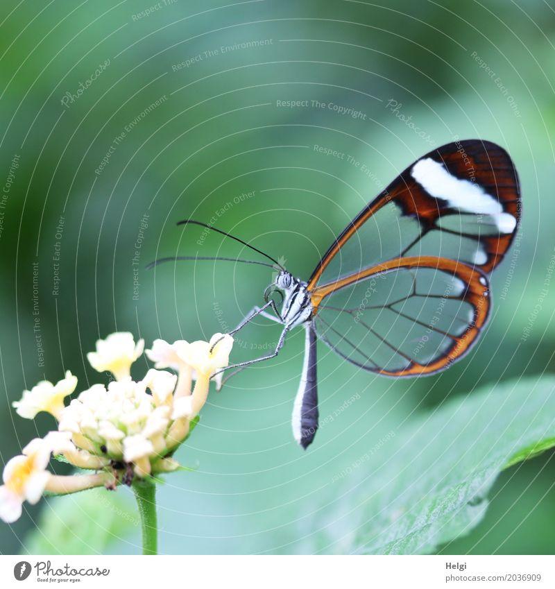 filigrane Schönheit Pflanze schön grün weiß Blatt Tier schwarz Leben gelb Blüte natürlich klein außergewöhnlich grau Zufriedenheit ästhetisch