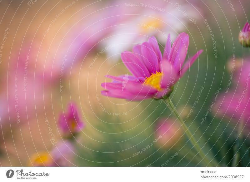 """"""" Ego """" Valentinstag Muttertag Geburtstag Natur Erde Frühling Schönes Wetter Pflanze Blume Gras Sträucher Blatt Blüte Wildpflanze Blütenblätter Margerite"""
