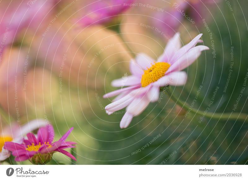 strecken und verbiegen Natur Pflanze schön grün Blume Erholung Blatt Blüte Frühling Wiese rosa Erde Geburtstag Sträucher Fröhlichkeit Schönes Wetter