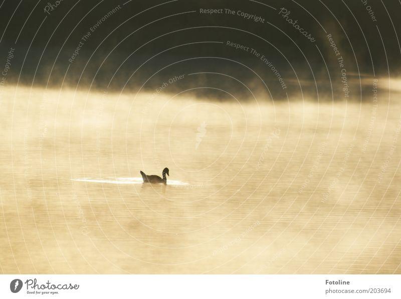 Morgenstund Umwelt Natur Landschaft Tier Urelemente Wasser Sommer Wetter Schönes Wetter Wärme Küste Seeufer Wildtier Vogel hell nass Gans Farbfoto