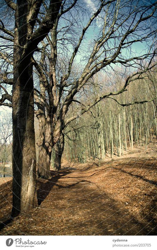 Kurz bevor Natur Baum ruhig Wald kalt Erholung Herbst Wege & Pfade Park Landschaft Luft Umwelt Zeit Wandel & Veränderung Vergänglichkeit laublos