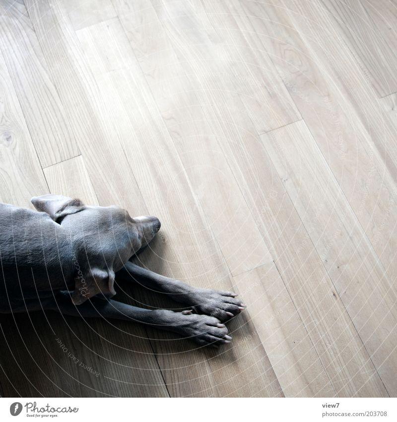 entspannen schön ruhig Tier Holz grau Hund braun Raum Wohnung schlafen ästhetisch Boden einfach liegen Vertrauen Fell