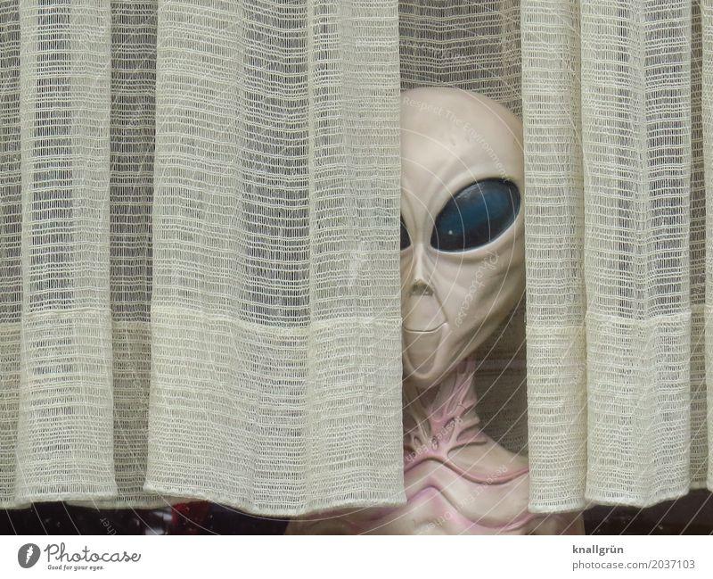 Nachbarschaft Kopf Auge Hals Brustkorb Gardine beobachten außergewöhnlich hässlich grün weiß Gefühle Neugier Überraschung Angst einzigartig entdecken bedrohlich
