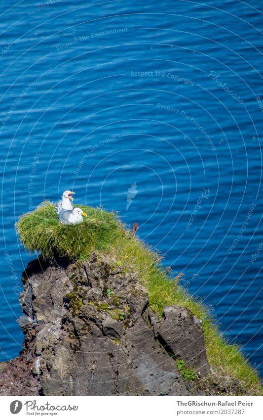 Vögel blau grün Meer Tier Liebe Gefühle Gras Stein Vogel Zusammensein Wildtier Fröhlichkeit Liebespaar Möwe Schnabel Klippe
