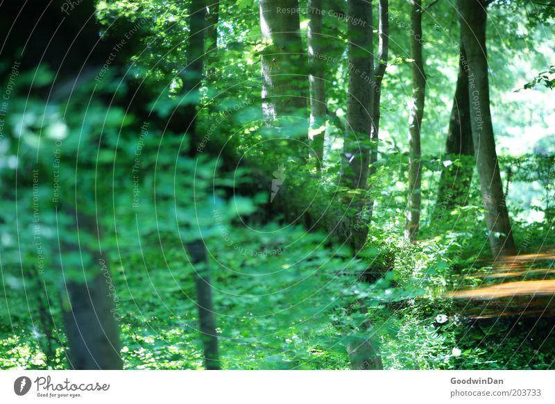 wo lang? da lang! [Spiegelung] Umwelt Natur Landschaft Pflanze Urelemente Wetter Schönes Wetter Baum außergewöhnlich schön Stimmung Farbfoto Menschenleer Tag