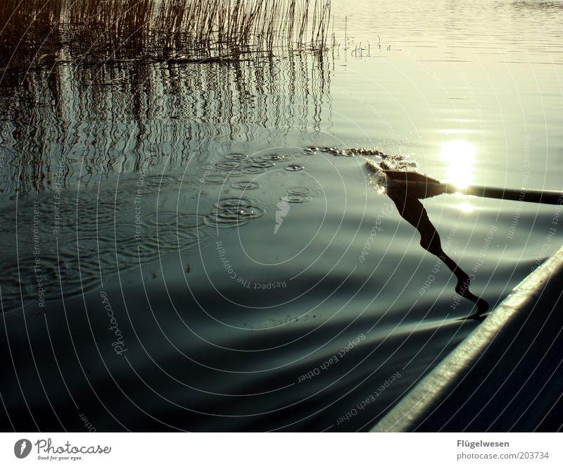 What a wonderful world?! Ferien & Urlaub & Reisen Freiheit See Wasserfahrzeug Wetter Umwelt Ausflug Tourismus Fluss Freizeit & Hobby Klima leuchten Schilfrohr Schönes Wetter Sonnenuntergang Abenddämmerung