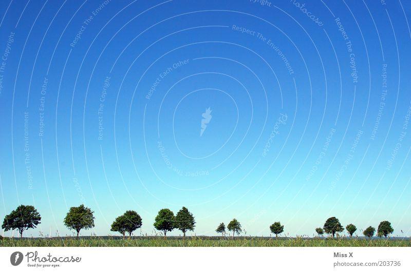 Allee Natur Himmel Baum Sommer Ferne Straße Wiese Gras rein Schönes Wetter Blauer Himmel Wolkenloser Himmel Baumreihe