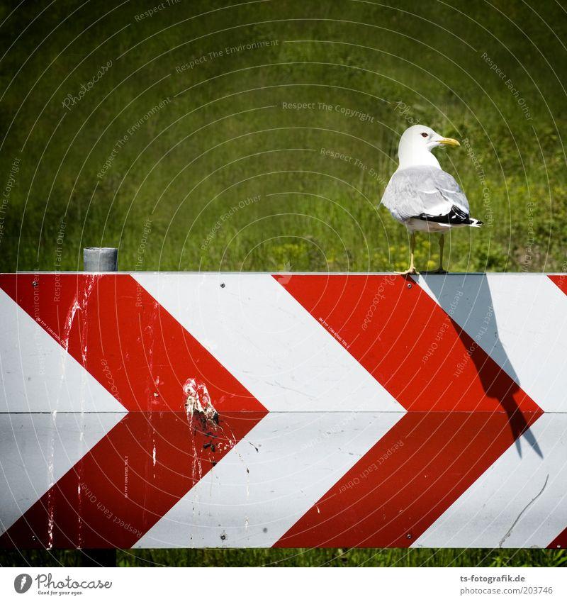 Doppelt hält besser Natur weiß grün rot Tier Gefühle Gras Landschaft Linie Vogel Umwelt Verkehr Streifen außergewöhnlich Kot Pfeil