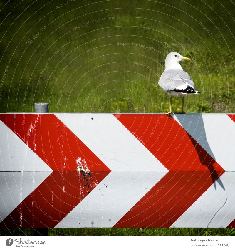 Doppelt hält besser Umwelt Natur Landschaft Tier Gras Verkehrszeichen Verkehrsschild Vogel Möwe Möwendreck Möwenvögel Schnabel Vogeldreck Kot 1 Hinweisschild