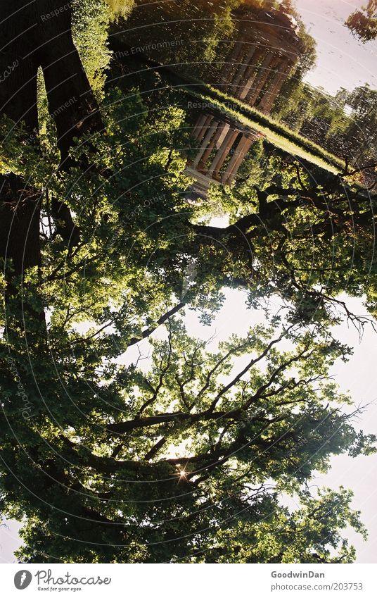 Pavillon Natur Wasser alt Baum See Park hell Stimmung Umwelt Schönes Wetter Spiegelbild Geäst Wasseroberfläche Wasserspiegelung