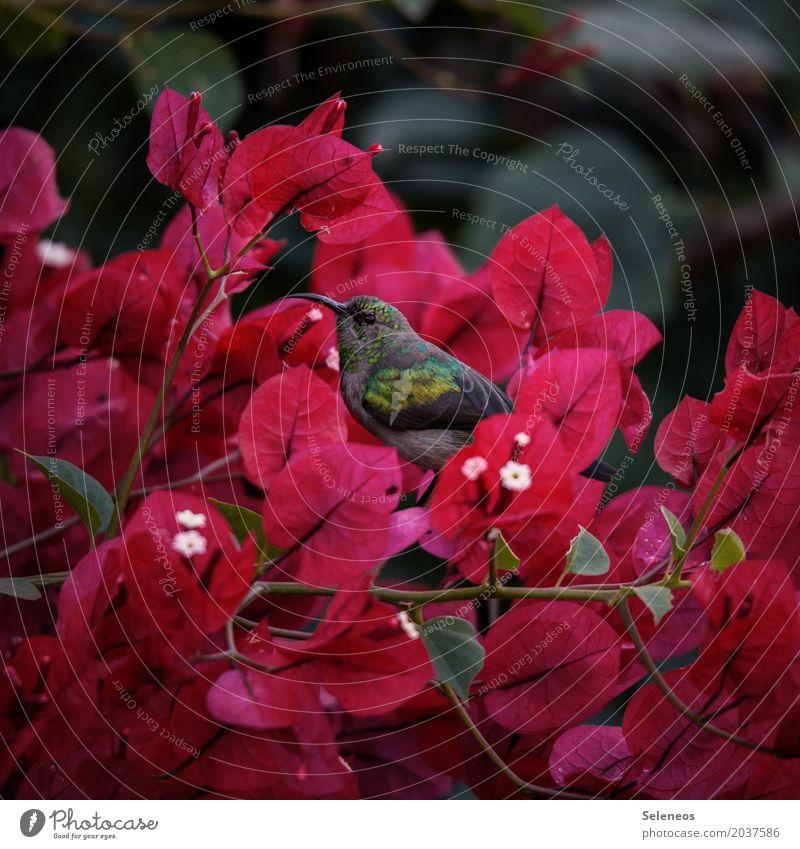 Nektarvogel Natur Pflanze Sommer Baum Blatt Tier Ferne Umwelt Blüte Frühling natürlich klein Garten Freiheit Vogel Park