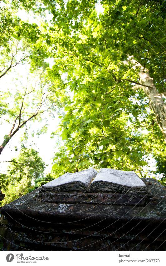 Buch der Bücher Kunst Kunstwerk Skulptur Umwelt Natur Pflanze Sonnenlicht Frühling Sommer Klima Wärme Baum Grünpflanze Wildpflanze Garten Park Friedhof
