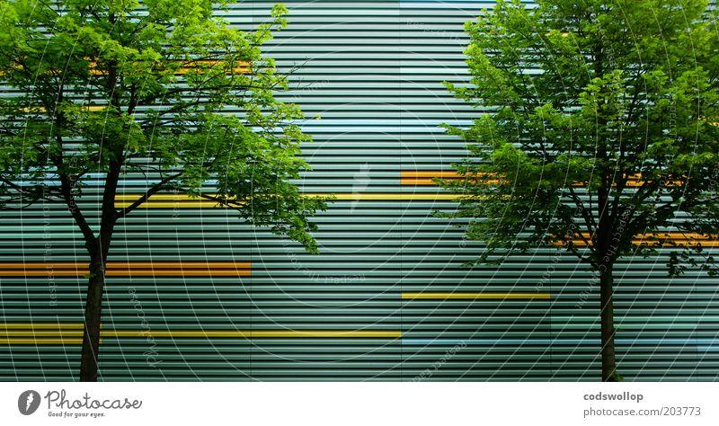 arborescence Natur Baum Stadt Sommer Linie 2 Architektur Fassade Gesellschaft (Soziologie) Linearität