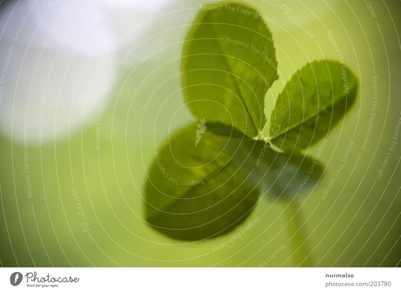 dann wünsche ich mal viel Glück Natur grün schön Pflanze Blatt Umwelt Gefühle Stimmung einfach Schönes Wetter Grünpflanze Schmetterlingsblütler Kleeblatt