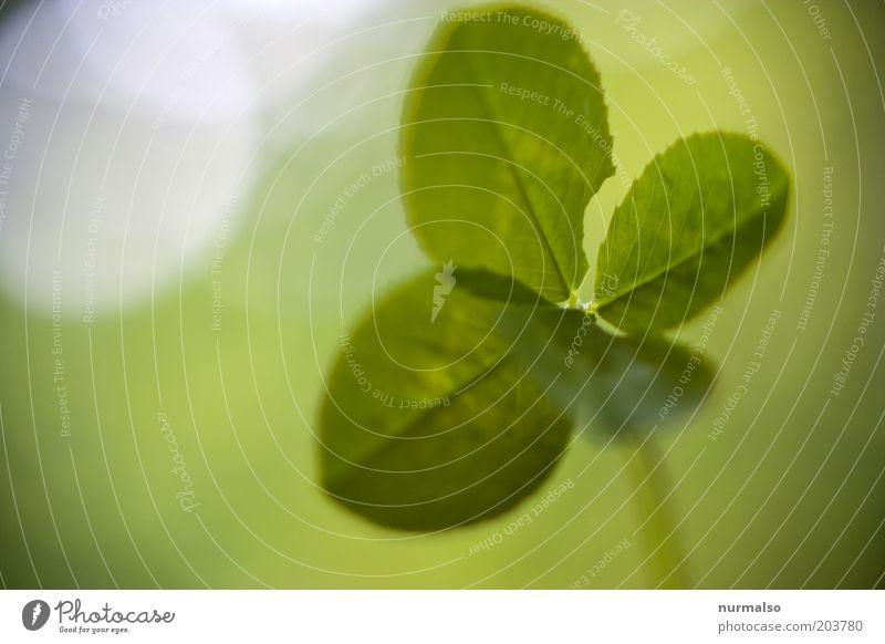 dann wünsche ich mal viel Glück Umwelt Natur Schönes Wetter Pflanze Blatt Grünpflanze Kleeblatt Glücksbringer einfach schön Gefühle Stimmung Frühlingsgefühle