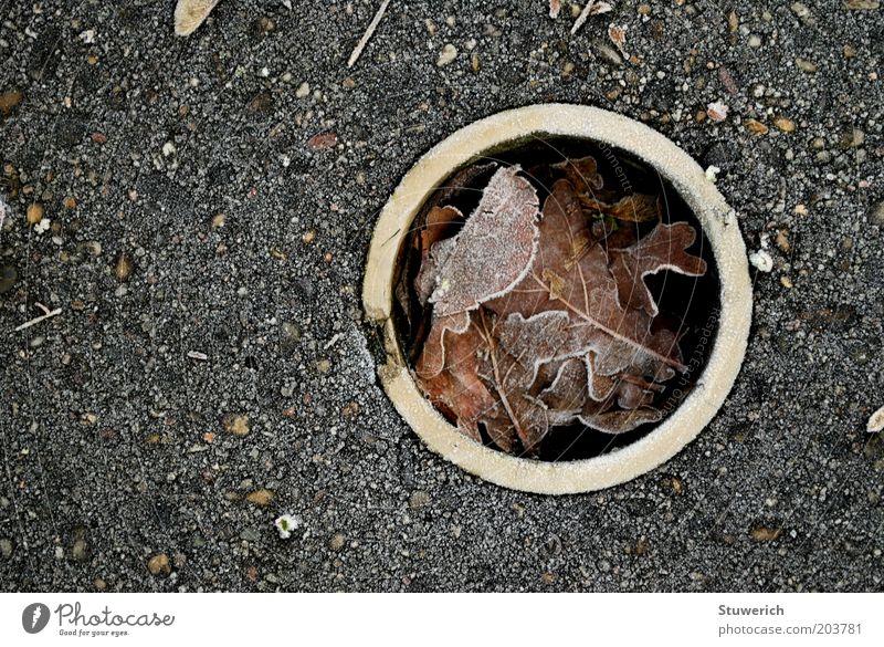 Frostlöchschken Winter Blatt Herbst Beton Kreis ästhetisch Boden authentisch Golf Röhren Loch Golfplatz Golfloch Winterpause