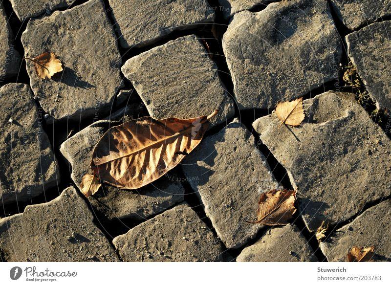Strassenblatt Blatt Herbst Stein ästhetisch Bürgersteig Kopfsteinpflaster herbstlich