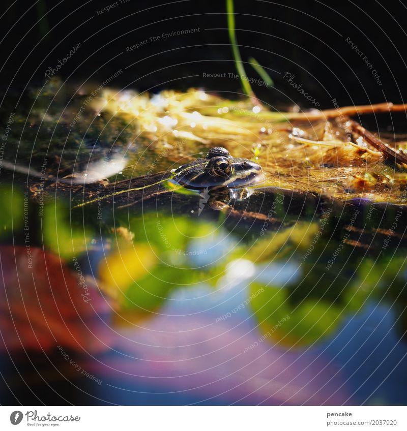farbtaucher Wasser Frühling Sommer Schönes Wetter Pflanze Garten Teich Wildtier Frosch 1 Tier Idylle Kröte Reflexion & Spiegelung Im Wasser treiben mehrfarbig