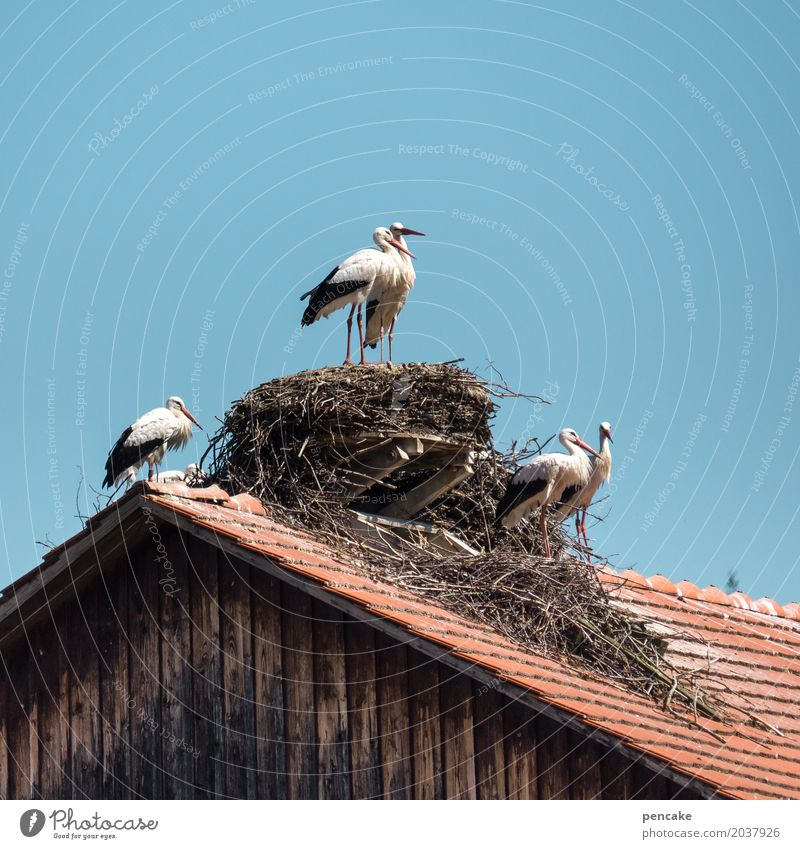 nichts ist ohne | risiko Natur Erotik Frühling Liebe Vogel Wildtier Tiergruppe Zeichen planen Dach Urelemente Dorf Wolkenloser Himmel Hütte Zuneigung Nest