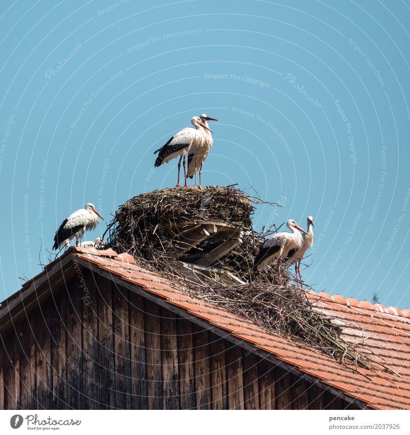 nichts ist ohne | risiko Natur Urelemente Wolkenloser Himmel Frühling Dorf Hütte Dach Wildtier Vogel Tiergruppe Zeichen Liebe Liebesaffäre planen Erotik Storch