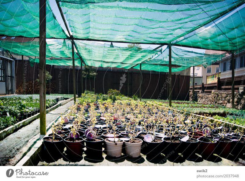 Bestellt und nicht abgeholt Pflanze Blatt ruhig Blüte Zusammensein Arbeit & Erwerbstätigkeit Ordnung stehen warten Blühend Schönes Wetter Sicherheit Schutz