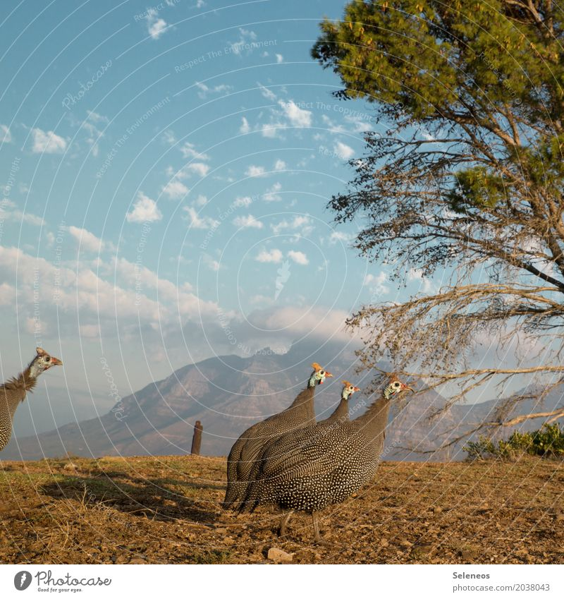 Echt? 1800? Ferien & Urlaub & Reisen Tourismus Ausflug Abenteuer Ferne Freiheit Sightseeing Städtereise Sommer Sonne Umwelt Himmel Wolken Schönes Wetter Baum