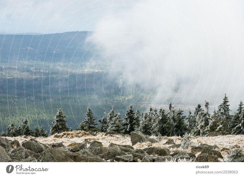 Landschaft mit Schnee auf dem Brocken im Harz Ferien & Urlaub & Reisen Tourismus Berge u. Gebirge Natur Wolken Baum Wald grün Umwelt Reiseziel Sachsen-Anhalt