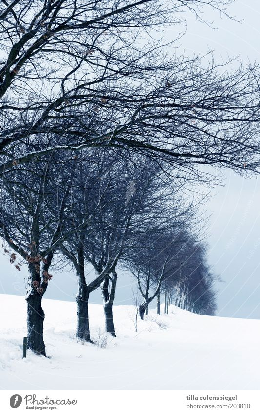 noch aus (k)alten Tagen übrig. Winter Schnee Umwelt Natur Landschaft Horizont schlechtes Wetter Eis Frost Baum frieren kalt blau weiß ruhig Baumreihe Ast