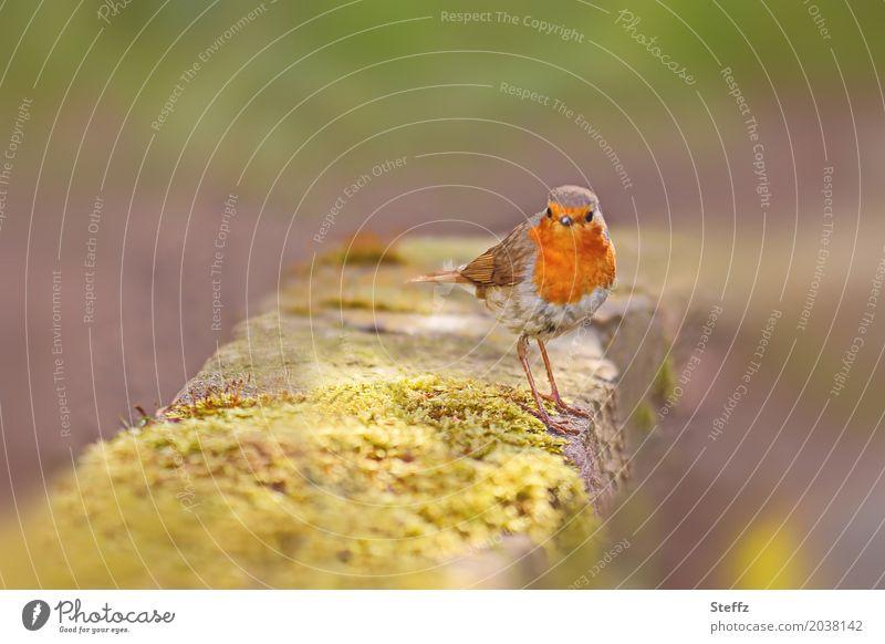 was gibt's heute zu essen? Natur Sommer schön grün Tier gelb Frühling Garten Freiheit Vogel orange Wildtier warten beobachten niedlich Neugier