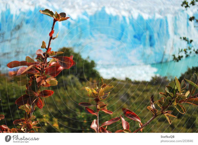 warmer Winter Natur Wasser weiß blau Pflanze kalt Schnee Landschaft Umwelt frei Sträucher natürlich Schönes Wetter Gletscher Argentinien