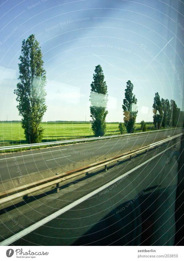 Belgien Straße Straßenverkehr Fahrbahn Autobahn Asphalt Leitplanke Pappeln Allee Baum Baumreihe Feld Ferne Seitenstreifen Linie fahren Ferien & Urlaub & Reisen