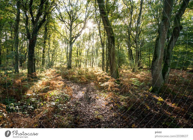 Zauberwald Natur Pflanze grün Sonne Baum Landschaft Einsamkeit Wald Wärme Umwelt Frühling braun Erde Sträucher Schönes Wetter Warmherzigkeit