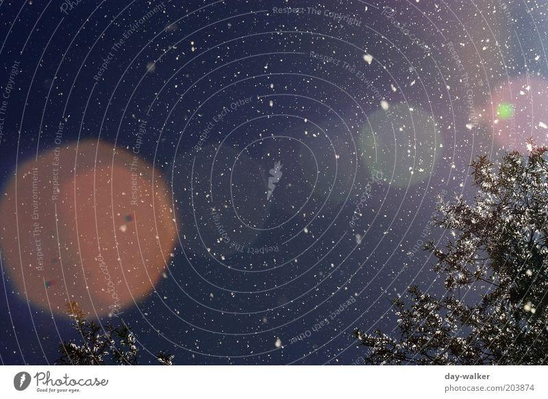 Pollenflug I Himmel Natur blau weiß Baum rot Frühling Park Wind fliegen Schönes Wetter Pollen Lichtpunkt Gegenlicht