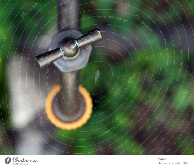 Wasser marsch. Frühling Sommer Garten grün Wasserhahn aufdrehen geschlossen Erfrischung Farbfoto Außenaufnahme Menschenleer Unschärfe Vogelperspektive