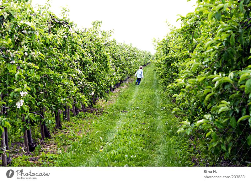 lauf Junge, lauf grün Bewegung Frühling Garten laufen Fröhlichkeit Kindheit Landwirtschaft Plantage Obstbau Apfelplantage