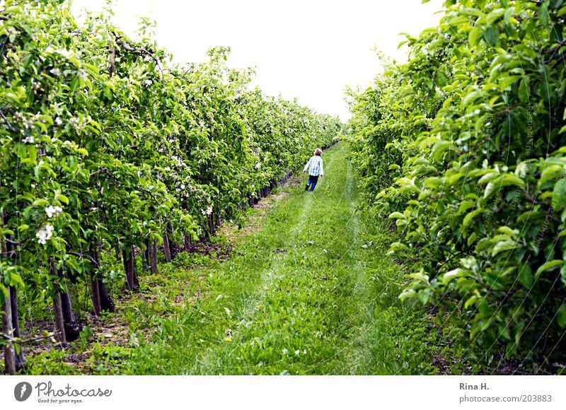 lauf Junge, lauf grün Junge Bewegung Frühling Garten laufen Fröhlichkeit Kindheit Landwirtschaft Plantage Kind Obstbau Apfelplantage