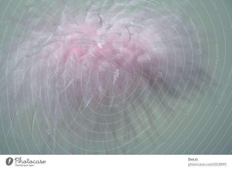 Cirrus floccus intortus Kitsch Krimskrams kuschlig weich rosa Leichtigkeit zart fluffig Schweben luftig duftig leicht zerzaust Farbfoto Innenaufnahme