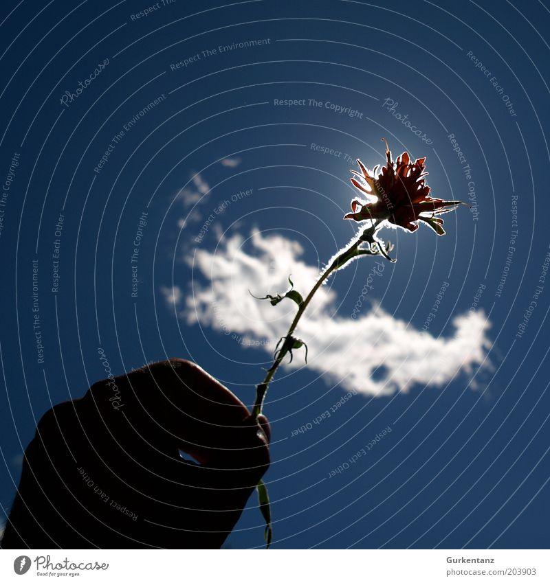 Paint the Sky Hand schön Himmel Sonne Blume blau Pflanze rot ruhig Wolken Blüte Frühling Glück Finger ästhetisch Romantik