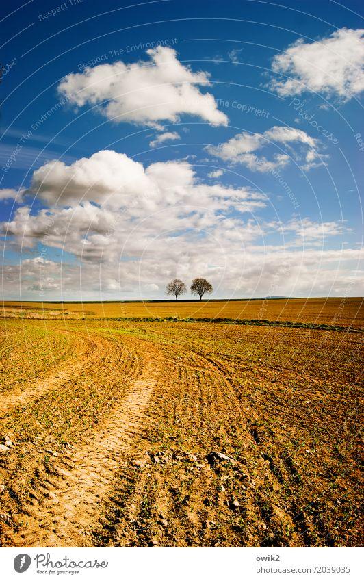 Übern Acker Umwelt Natur Landschaft Erde Luft Himmel Wolken Horizont Frühling Klima Schönes Wetter Baum Feld stehen Zusammensein trocken geduldig ruhig