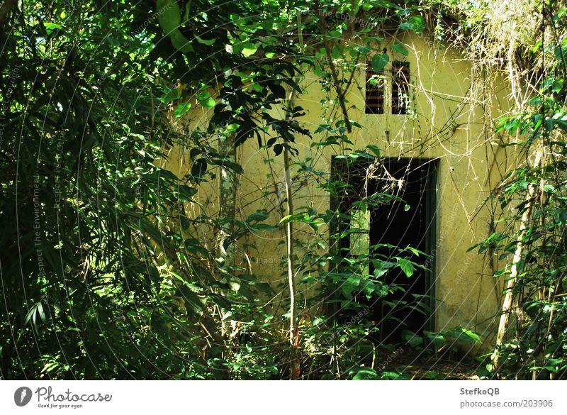 Urwald Umwelt Natur Landschaft Pflanze Baum Sträucher Wildpflanze Wald exotisch natürlich rebellisch wild grün Einsamkeit Inspiration Ferien & Urlaub & Reisen