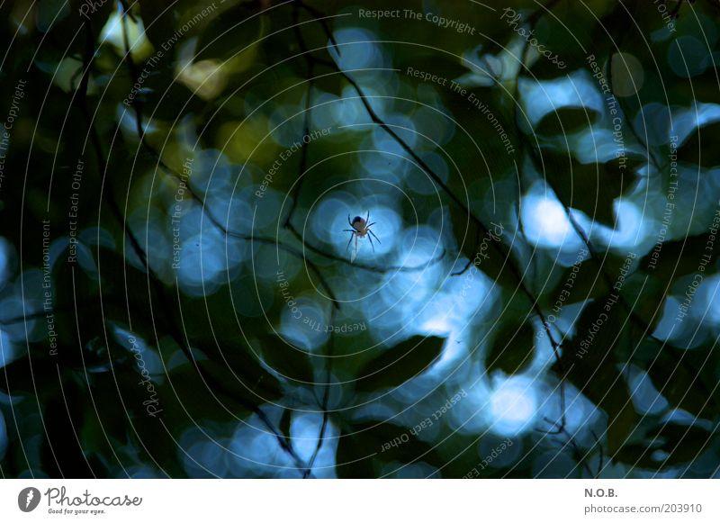 Ui Spinne! Pflanze Tier 1 bedrohlich blau grün Gefühle Stimmung träumen Angst Entsetzen Respekt Mittelpunkt unheimlich Farbfoto Außenaufnahme abstrakt
