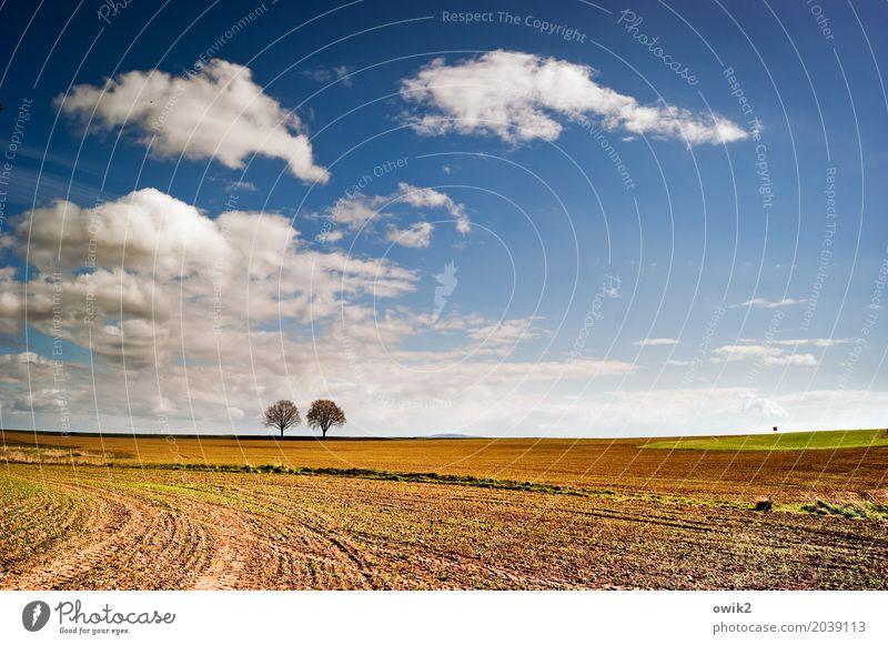 Zweisam Umwelt Natur Landschaft Luft Himmel Wolken Horizont Frühling Klima Schönes Wetter Baum Feld Verkehrszeichen Zusammensein Unendlichkeit ruhig Idylle