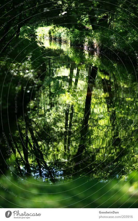 wo lang? da lang! II Natur Baum grün Pflanze Blatt Einsamkeit Wald kalt Bach Spiegelbild friedlich Wasserspiegelung