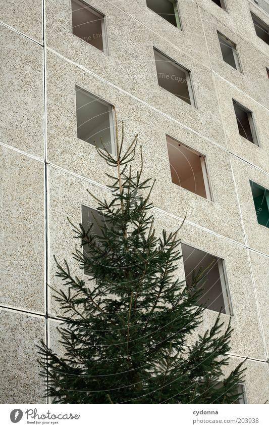 Nix in der Platte hab'n Baum ruhig Wand Fenster Mauer Architektur Zeit Fassade leer offen Wandel & Veränderung Vergänglichkeit Tanne Verfall Vergangenheit