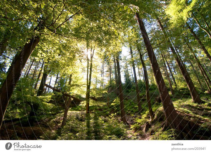 Silberbachtal Natur Baum Sonne grün Pflanze Sommer Wald Leben Freiheit Wärme Landschaft hell Stimmung braun Umwelt frisch