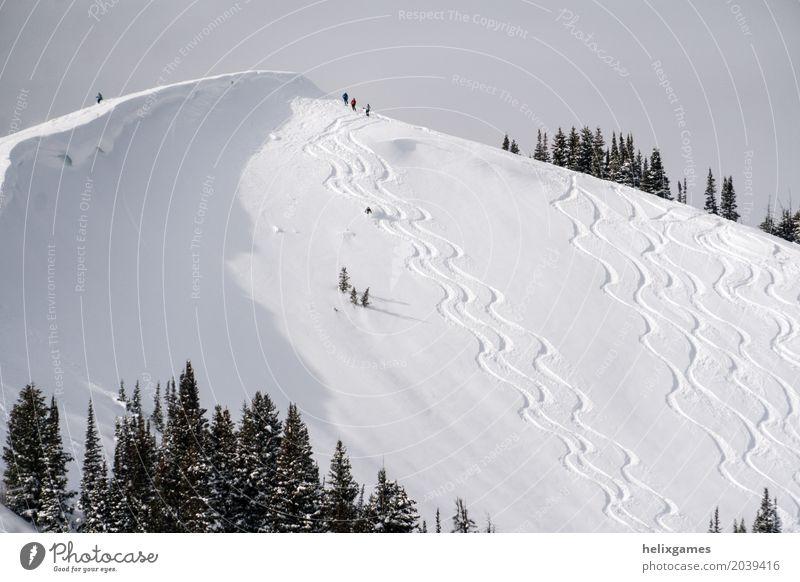 Powder Skifahren Winter Schnee Berge u. Gebirge Sport Snowboard Natur Landschaft Alpen frisch blau weiß Aktion alpin Backcountry kalt tief Freeride gefroren