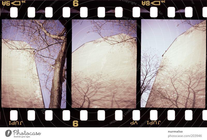 3mal1ne Wand mit Baum Mauer Kunst Umwelt Fassade Filmmaterial Dach Ast analog trashig Putz eckig Altbau Dachrinne Brandmauer